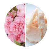 八重桜花エキス&八重桜由来酵母酒粕エキス